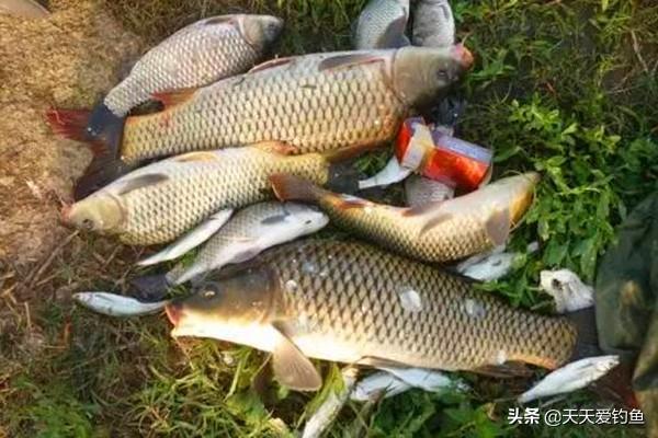 钓鱼窍门:这些身边常见的东西,用来钓鱼效果蛮好