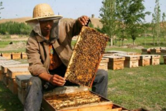 〔精品课程〕2019更新版《蜜蜂养殖教程大全》